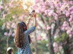 4月のお花見旅行