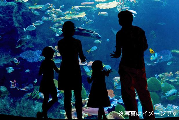 ワイキキ水族館のイメージ