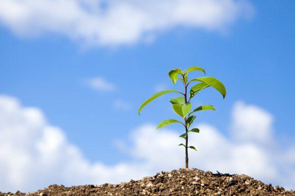 記念イベントとして植樹