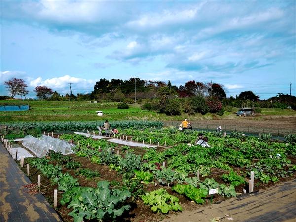 社員旅行_社内イベント_農作業体験_里山シェア