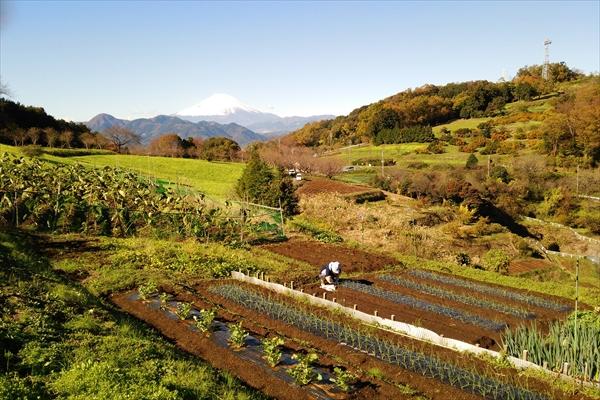 社内イベント・社員旅行_農作業体験_里山シェア