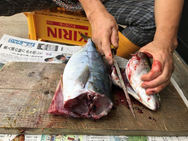 魚を自らさばいて昼食に