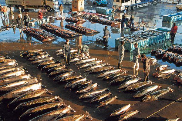 気仙沼魚市場の迫力ある様子