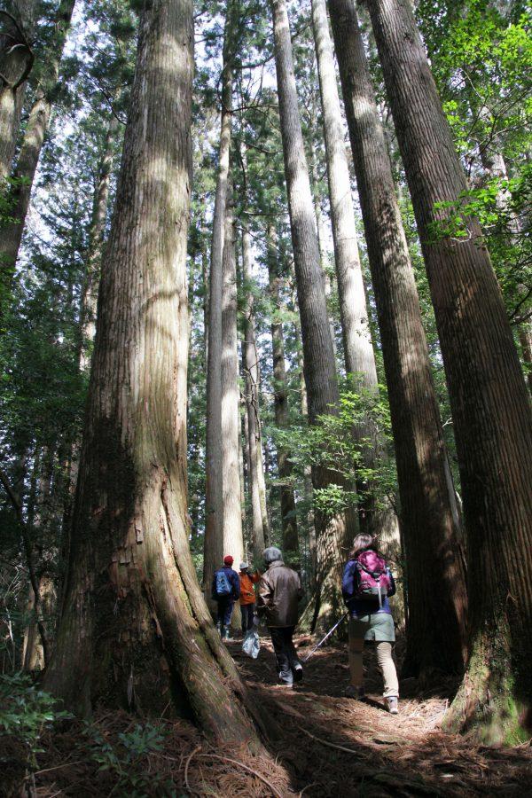 千本山ハイキング
