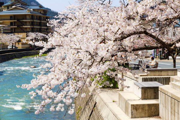 桜の季節のあつみ温泉