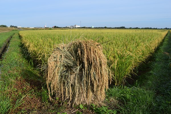 山形は日本でも有数の米どころ
