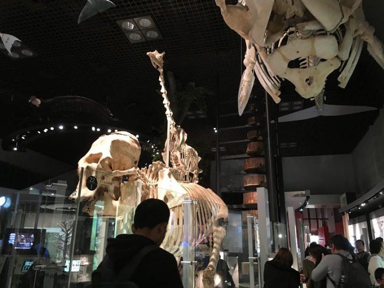 国立科学博物館「地球館」