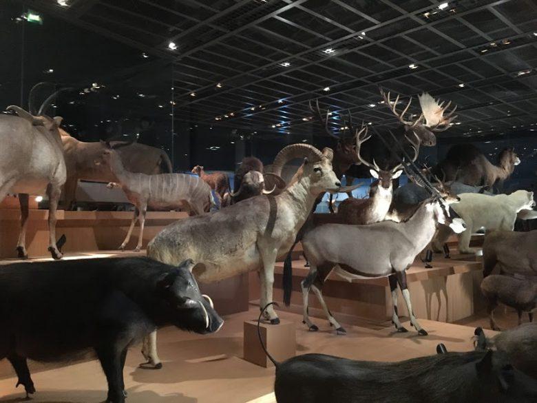 国立科学博物館「地球館」の3階