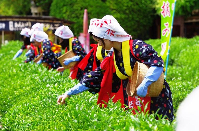 茶摘み祭(写真提供:岡山後楽園)