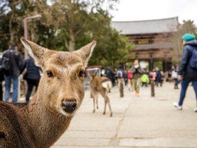 奈良に社員旅行は人気がない?