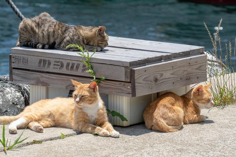 猫島・相島