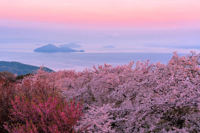 春の紫雲出山
