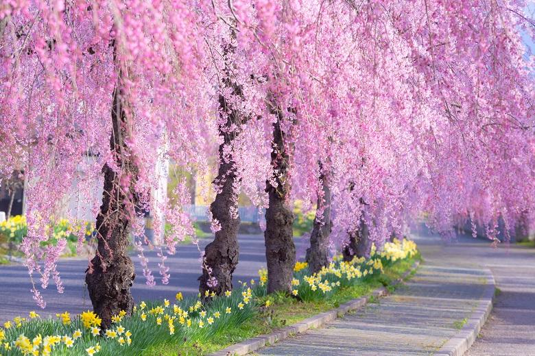春の社員旅行でお花見