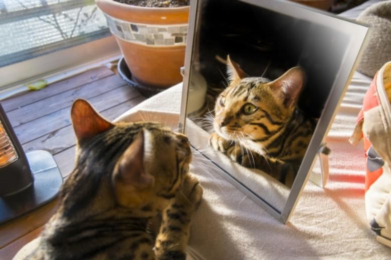 鏡を置いて集中力アップ