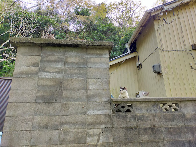田代島の猫