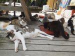「道の駅」で寛ぐ猫たち